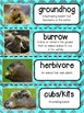 Groundhogs Nonfiction Unit