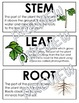 Growth and Changes in Plants Illustrated Word Wall (Grade