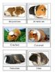 Guinea Pig 3 Part Cards