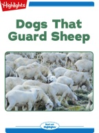 Dogs That Guard Sheep