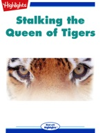 Stalking the Queen of Tigers