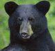 Animal HUNGRY AS A BEAR Reading Wksht 8 True/False +10 Mul
