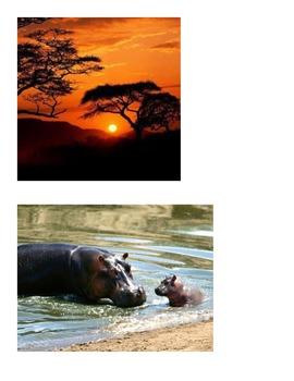 Habitat - African Savannah