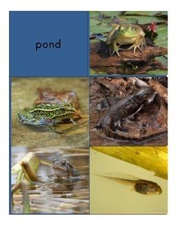 Habitat Sort Cards: Amphibians
