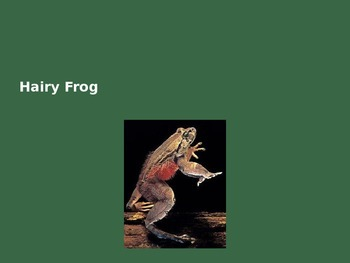 Hairy Frog - Power Point Information Pictures Facts History