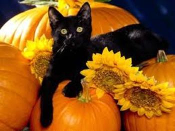 Halloween Black Cat Book