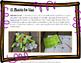 Halloween Math Scrolls - Math Center (3rd-5th)
