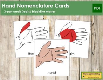 Hand Nomenclature (Simple) Cards (Red)