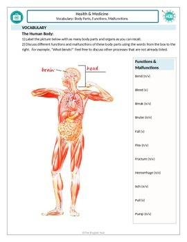 Health and Medicine (B): Naming human body parts, function