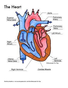 Heart Diagrams for Labeling and Coloring, With Reference C