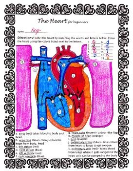 Heart for Beginners