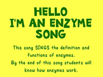 Hello, I'm an Enzyme