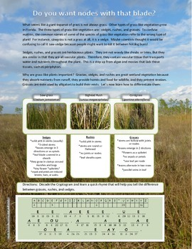 Herbaceous Plants:  Grasses, Sedges, and Rushes