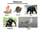 Herbivore, Carnivore, Omnivore Posters with Definition and