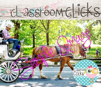 Horse in Central Park Image_112: Hi Res Images for Blogger