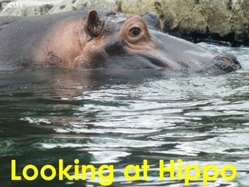 African Animals: Hippo - PDF presentation