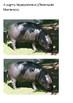 Hippopotamus Word Search