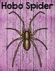 Hobo Spider Research Bundle  {Anchor Chart, Report, Trifol