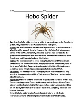 Hobo Spider - Review Article Facts Information Questions V