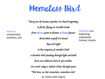 Homeless Bird Vocabulary