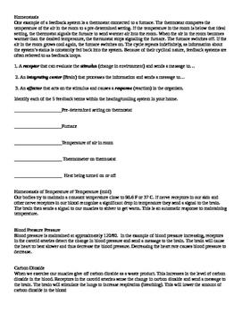 Homeostasis Practice Worksheet