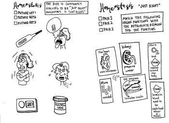 Homeostasis coloring sheet EOC