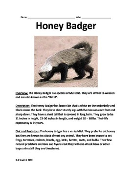 Honey Badger - Lesson article questions vocabulary facts i