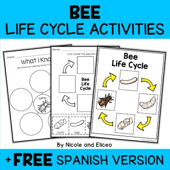 Honey Bee Life Cycle Activity