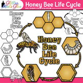 Honey Bee Life Cycle Clip Art - Animal Groups, Insects, Bugs