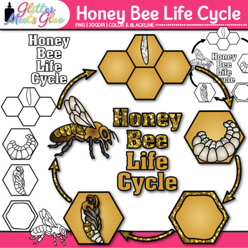Honey Bee Life Cycle Clip Art {Great for Animal Groups, In