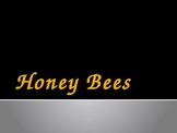 Honey Bees Powerpoint Presentation