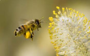 Honeybee Brochure Research Project