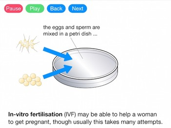 Hormones and Fertility (Video)