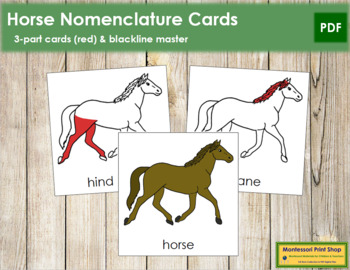 Horse Nomenclature Cards (Red)
