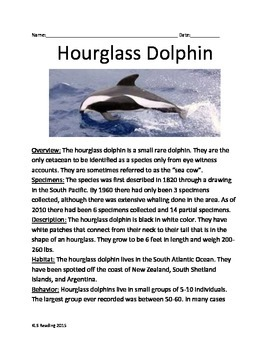 Hourglass Dolphin - Rarest Dolphin - Informational Article