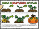 Pumpkin Life:  Life Cycle and Investigation Kit for Kinder