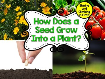 Life Cycle of a Seed to a Plant