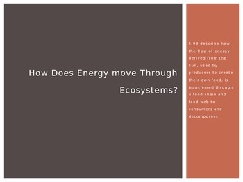 How Does Energy move Through Ecosystems?
