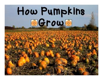How Pumpkins Grow