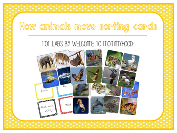 How animals move sorting activity