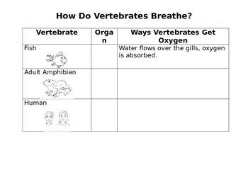 How do Vertebrates Breathe? Worksheet