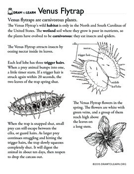How to Draw a Venus Flytrap Worksheet