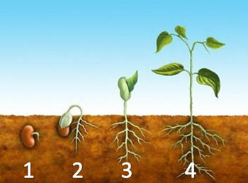 How to READ a PICTURE GRAPH  & OBSERVE PLANT LIFE CYCLES~M