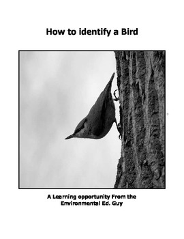 How to identify a Bird