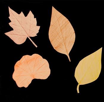How to make leaf rubbings
