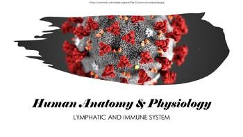 Human Anatomy & Physiology Lymphatic System & Immunity Pre
