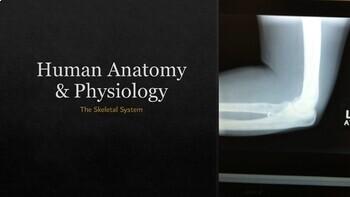 Human Anatomy & Physiology Skeletal System Presentation