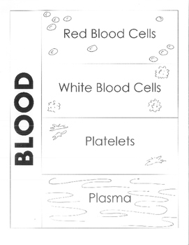 Human Body - Circulatory System - Components of the Blood