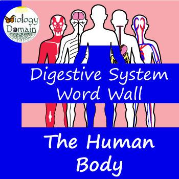 Human Body: Digestive System Vocabulary Cards