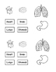 Human Body: Heart, Brain, and Lungs Sort